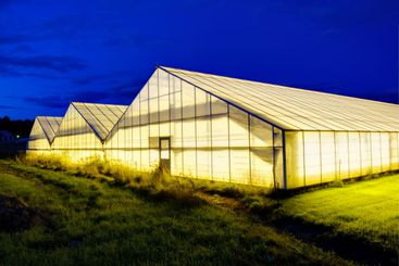 An industrial polythene greenhouse exterior, Sweden