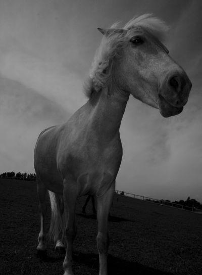 hästen