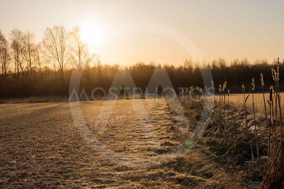 Soluppgång över åker