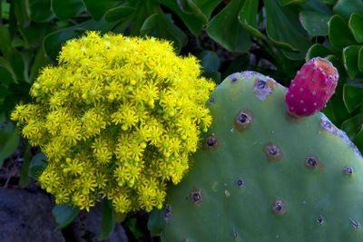 canary islands, la palma , north,guelguen reserve :...