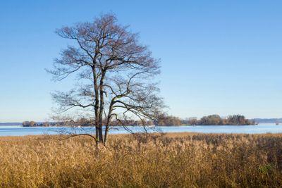 Old tree at lake Chiemsee
