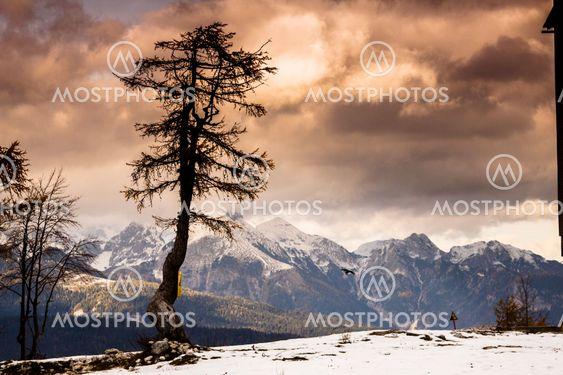 Single tree and Julian Alps