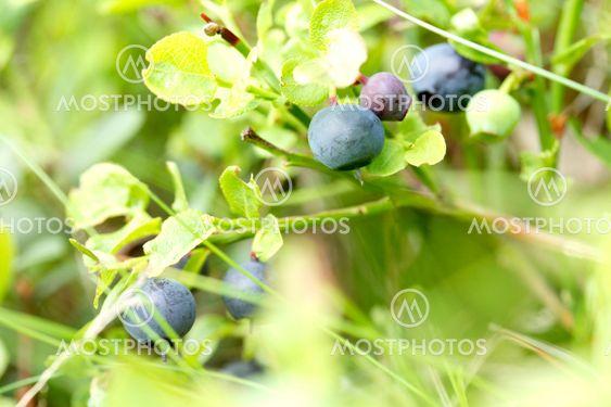 summer's best berries