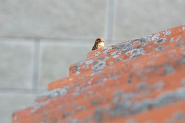 A bird sitting on top of a building
