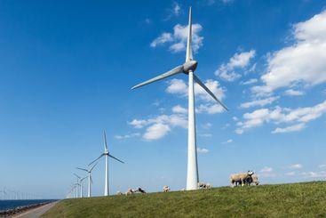 Dutch dike with sheep and wind turbines