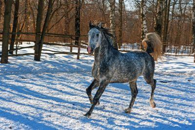 Horse, winter, snow - 3.