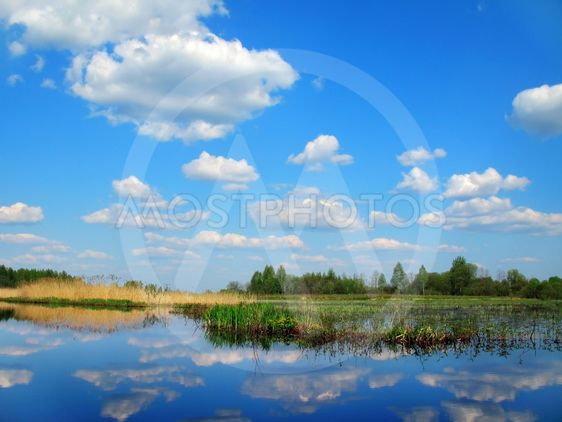 spring lake - blue sky  and yellow reed
