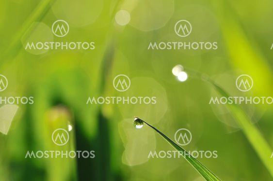 Formiddag græs