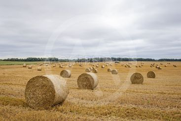 Hay roll in the meadow against a cloudy sky on a wide lens