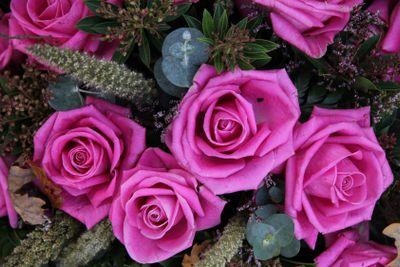 purple pink roses
