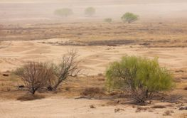 Dust storm on barren plain