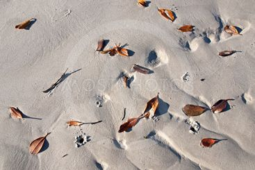Leaves on a White Sandy Beach. Frazer Island.
