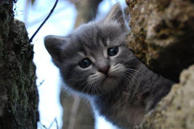 Small grey cat 3