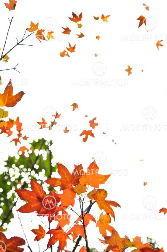 Hösten lönn lämnar bakgrund