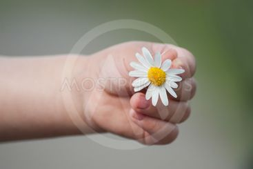 daisy in hand of little boy