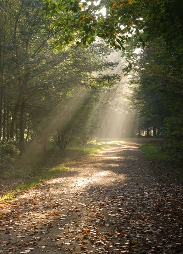 Sunbeams in autumn forest