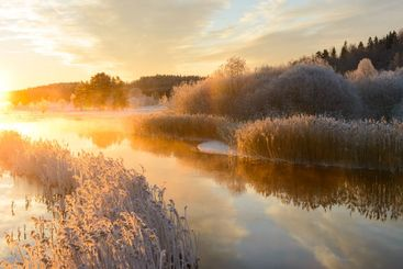 Frost covered reeds lining a stream at sunrise
