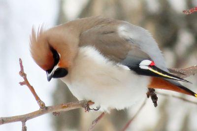 Птицы  Алтая