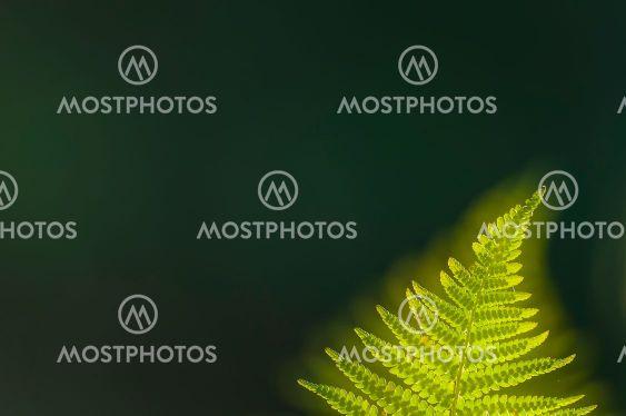 Green fern leaf against dark background