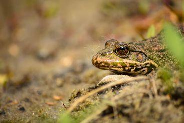 Frog basking in the sun