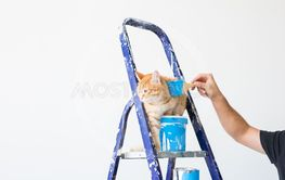Repair, painting the walls, the cat sits on the...
