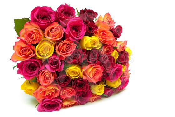 Large beautiful bouquet of roses isolated on white...