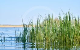 Grass on the shore of a lake