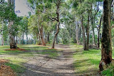 Bush Track - Landscape.