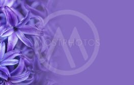 abstract flower background illustration