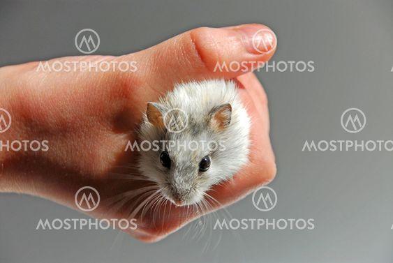 Hamster child hand