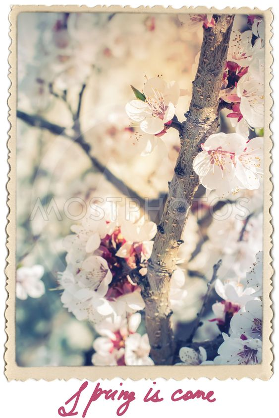 Retro Card with Flowers Cherry Blossoms