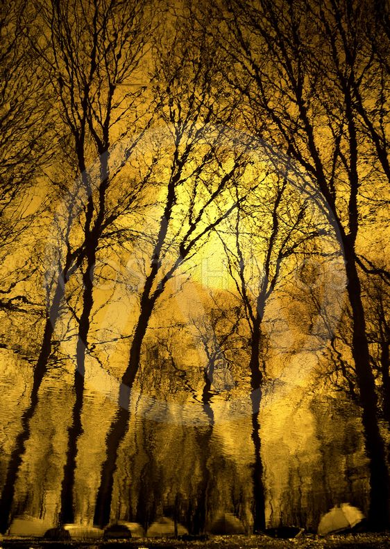Golden reflection..rotate