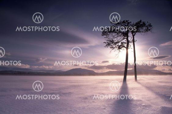 Snow in north Sweden