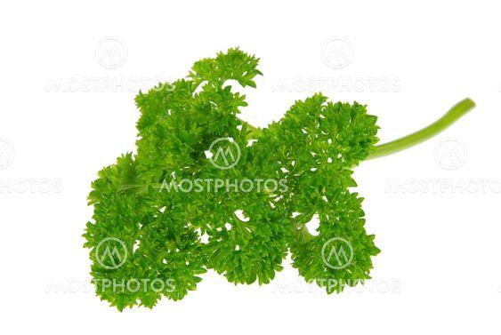 Petersilie - parsley 02