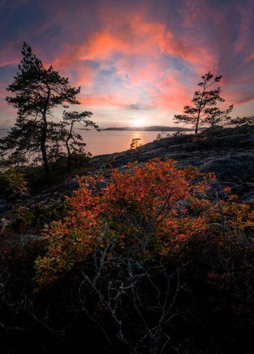 Fall foliage of a bush against dramatic sunset