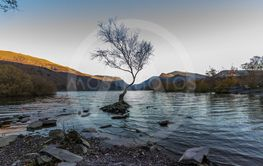 The lone tree on evening, Llanberis, North Wales