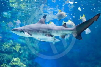 Big shark in water
