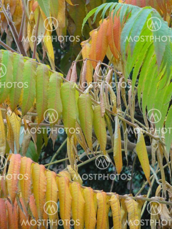 Autumn Coloured PLant