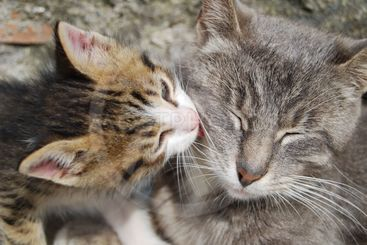 Mother cat with her son 3