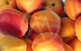 many orange peach at day