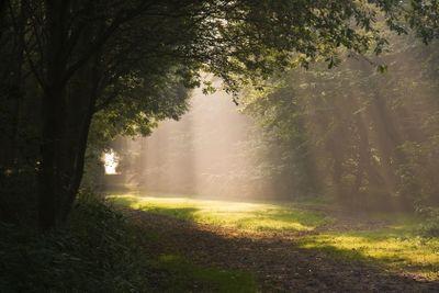 Sunrays and mist