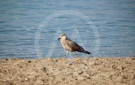 Fågel på strandpromenad