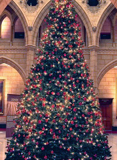 Senate Christmas Tree