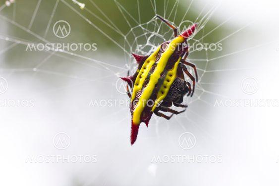 Spider og web