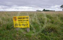Fågelskyddsområde vid Hornborgasjön, Västergötland,...