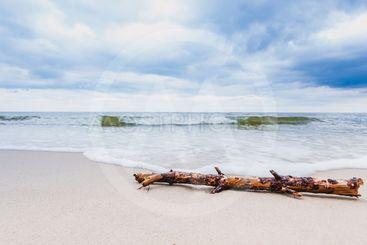 Tree trunk on sea shore, nature landscape