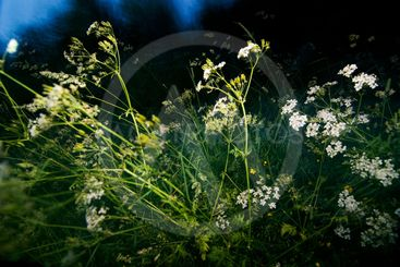 Flowers and grass at night