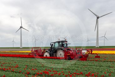 Farmer at tractor with mechanical device cutting blossoms...
