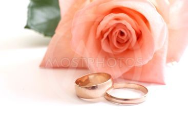 Rose and wedding rings on a white background