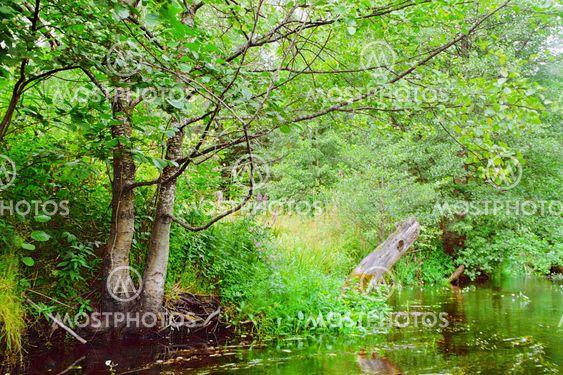 Green river kust